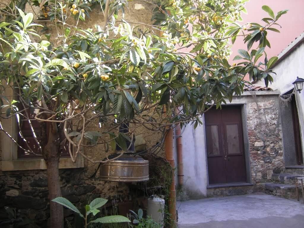 Aci Trezza: Casa-Museo del Nespolo